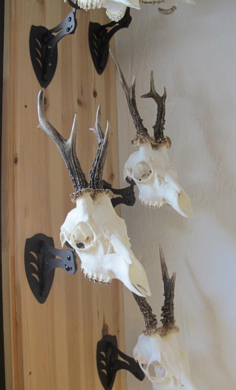 Trophy Gallery Skull Hooker European Skull Bracket