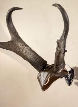 skullcap-5